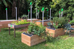 These are automated gardens that make growing your own highly nutritious food very easy.