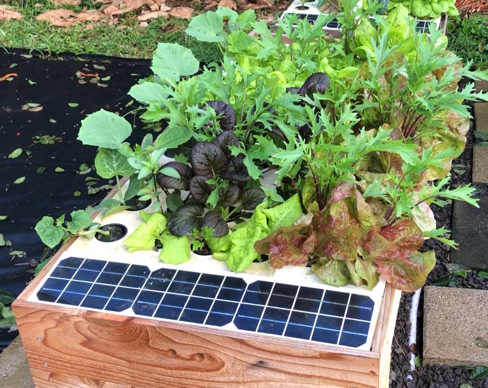 Grow salads.